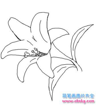 淡雅的百合花简笔画画法 怎么画淡雅的百合花 简笔画花朵 儿童简笔画