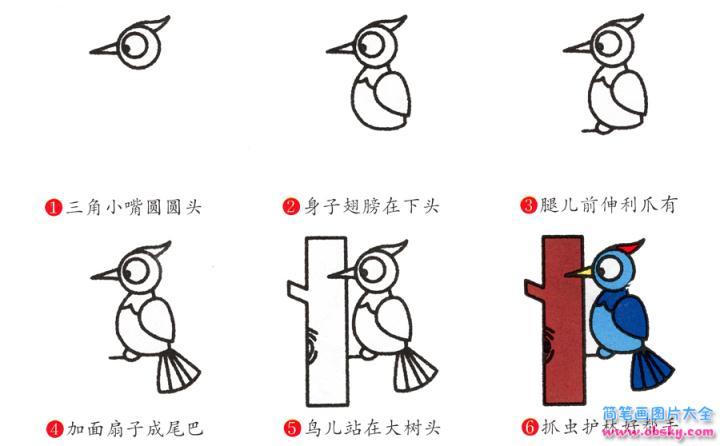 简笔画啄木鸟的具体步骤图示