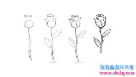 简笔画含苞待放的玫瑰花的具体画法步骤图片教程