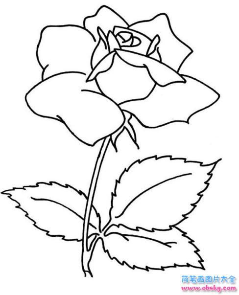 盛开的玫瑰花简笔画画法 怎么画盛开的玫瑰花 简笔画花朵 儿童