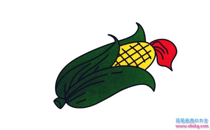 彩色简笔画玉米的图片教程