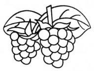 教你画两串葡萄简笔画