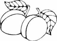 教你画两个桃子简笔画