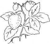 教你画儿童:成熟的草莓简笔画