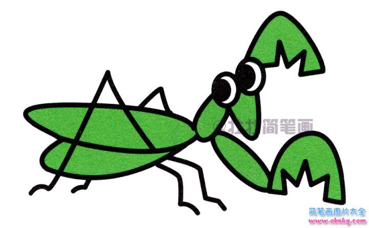 螳螂简笔画画法 怎么画螳螂的简笔画 简笔画动物 儿童简笔画图片大全
