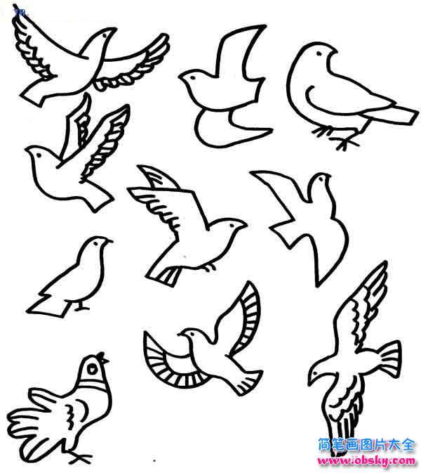 各种形态的和平鸽简笔画大全 简笔画和平鸽 儿童简笔画图片大全