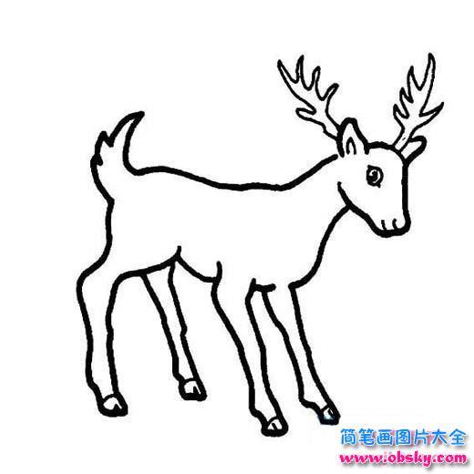 山鹿简笔画图片