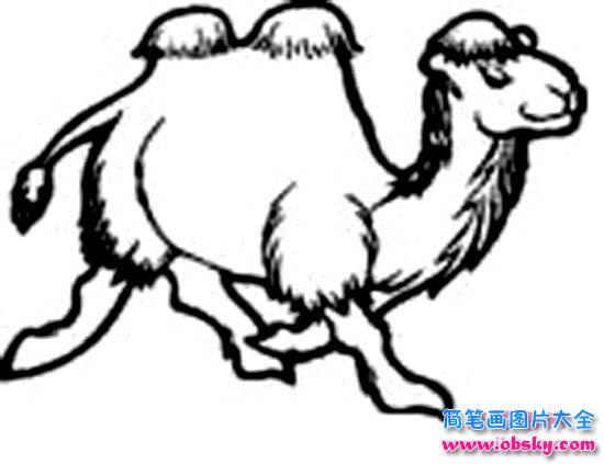 奔跑的骆驼简笔画图片