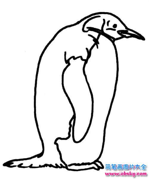 企鹅侧面简笔画图片