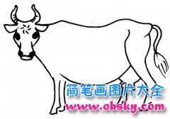 动物简笔画:牛