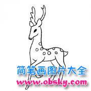 幼儿动物简笔画图片:鹿