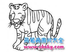 动物简笔画:老虎