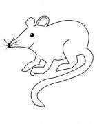 动物简笔画:老鼠