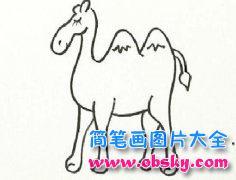少儿动物简笔画:骆驼