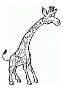 儿童简笔画:长颈鹿