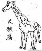 动物简笔画:长颈鹿