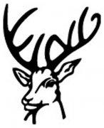 鹿头简笔画图片